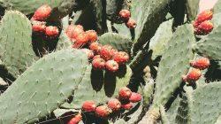 cactus cozyvibe body