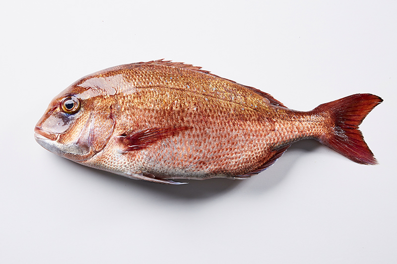 fish_theodosis