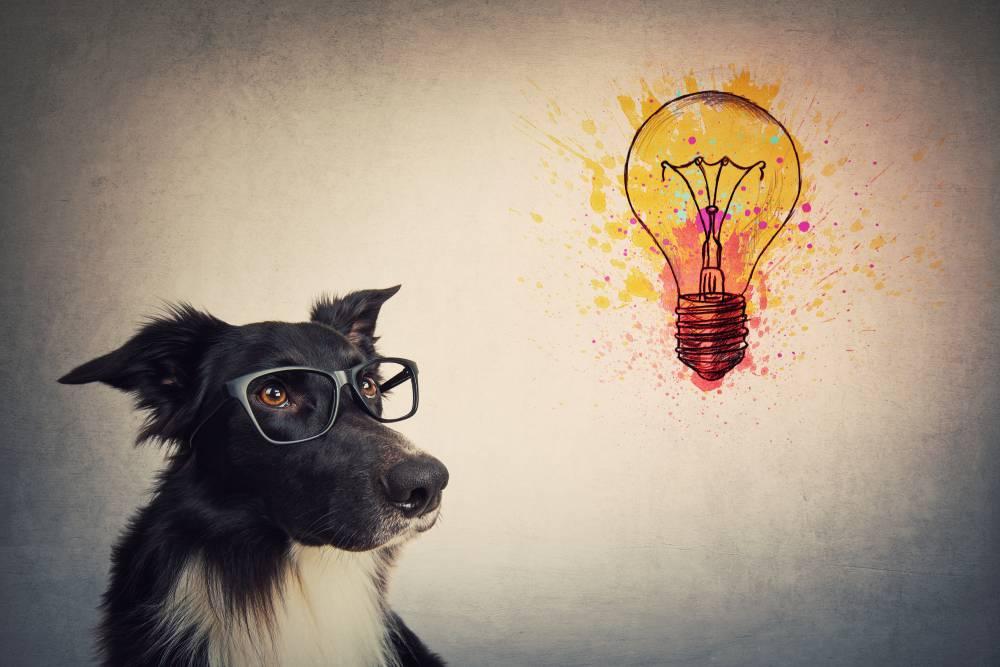 Genius Dog Challenge