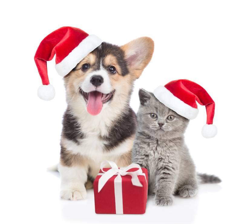 cat and dog xmas