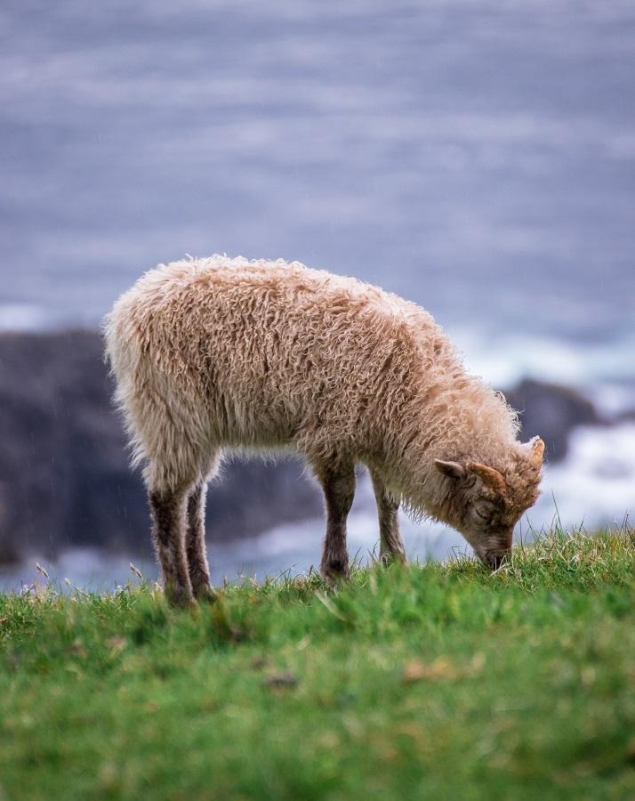 Νησιά Φερόε: Η άγρια ομορφιά στο προσκήνιο