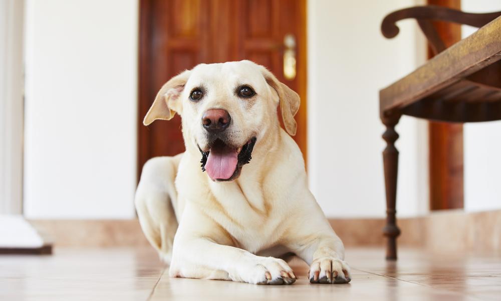 σκύλο