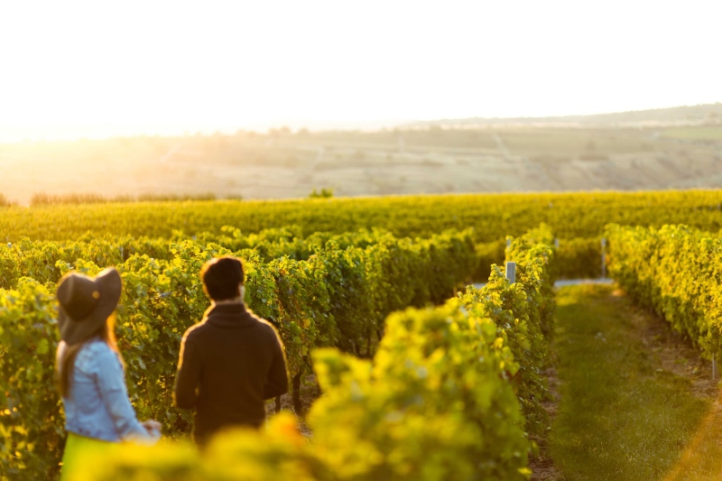vineyards Porto Carras